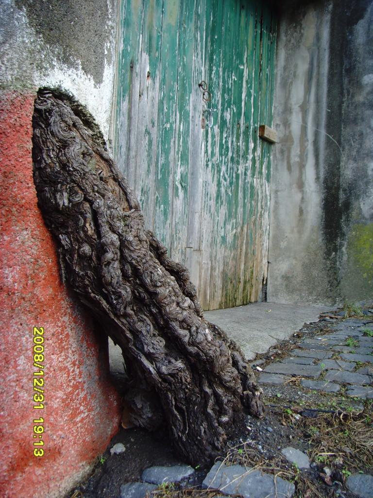 Die Natur findet einen Weg – Madeira 2008